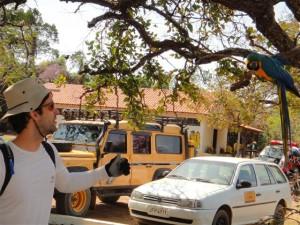 Arara na sede do Parque controlado pelo IBAMA