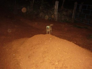 O barulho que ouvimos ao final seria deste cachorro?