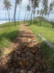 Trecho da pista com cascas de coco.